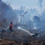 Kebakaran hutan yang mengakibatkan kerusakan alam.