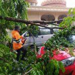 Hujan Deras Tumbangkan Pohon, Timpa 2 Mobil