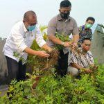 Plt Walikota Medan, Akhyar Nasution saat ikut melakukan panen perdana kacang tanah di Kampung Millenium Agro Rooftop Plaza Millenium.