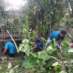 Sejumlah petugas sedang membuat perangkap harimau di salah satu tempat lintasan harimau Sumatra di Lauk Damak, Kecamatan Bahorok, Langkat.