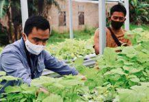 Kelompok pengelola sayur hidroponik Kuala Tanjung, Kabupaten Batu Bara, Sumatera Utara