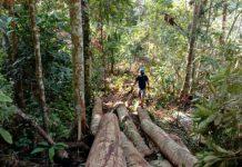 Pusat Informasi Rakyat (PIRA) Sumatera Utara (Sumut) meminta DPRD Kabupaten Padang Lawas (Palas) untuk segera menghentikan perambahan hutan dengan dalih pembukaan perkebunan Inti rakyat (PIR) di Desa Sianggunan, Kecamatan Sosopan, Kabupaten Padang Lawas.