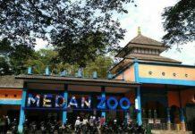 Kebun Binatang Medan atau Medan Zoo yang terletak di Jalan Bunga Rampe IV, Kelurahan Simalingkar B, Kecamatan Medan Tuntungan akhirnya mulai dibuka sejak, Jumat (25/6/2021)